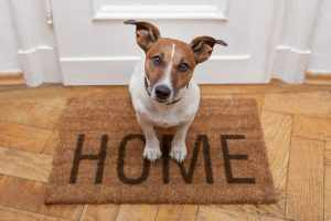 limpiar manchas mascotas
